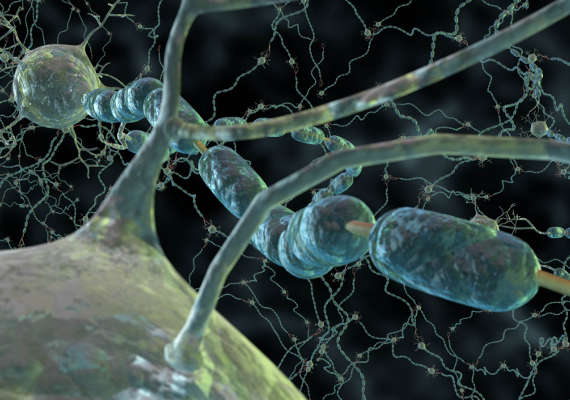Microscopic view of neurons showing schwann cells wrapped around an axon